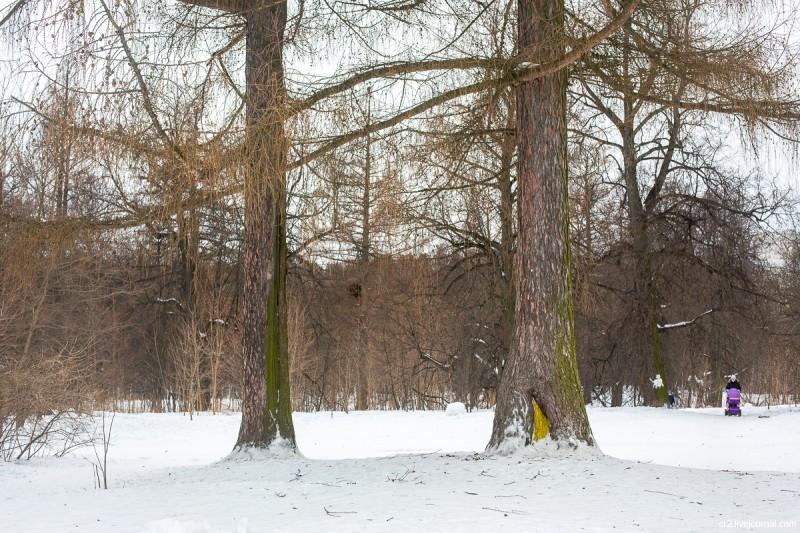 В парке у усадьбы Ясенево, старые деревья. Москва