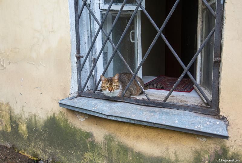Московский котик