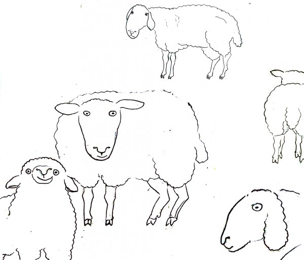 еще овцы