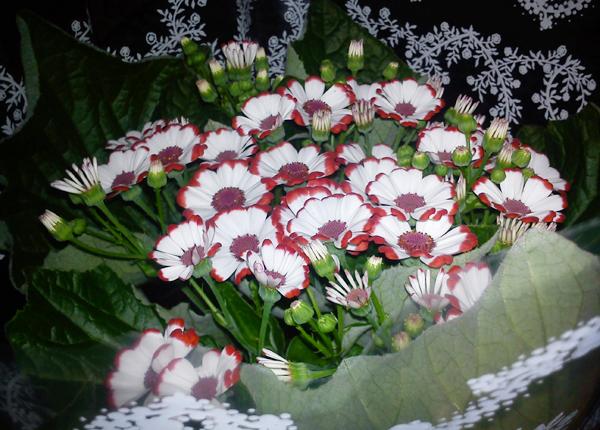 05flowers01