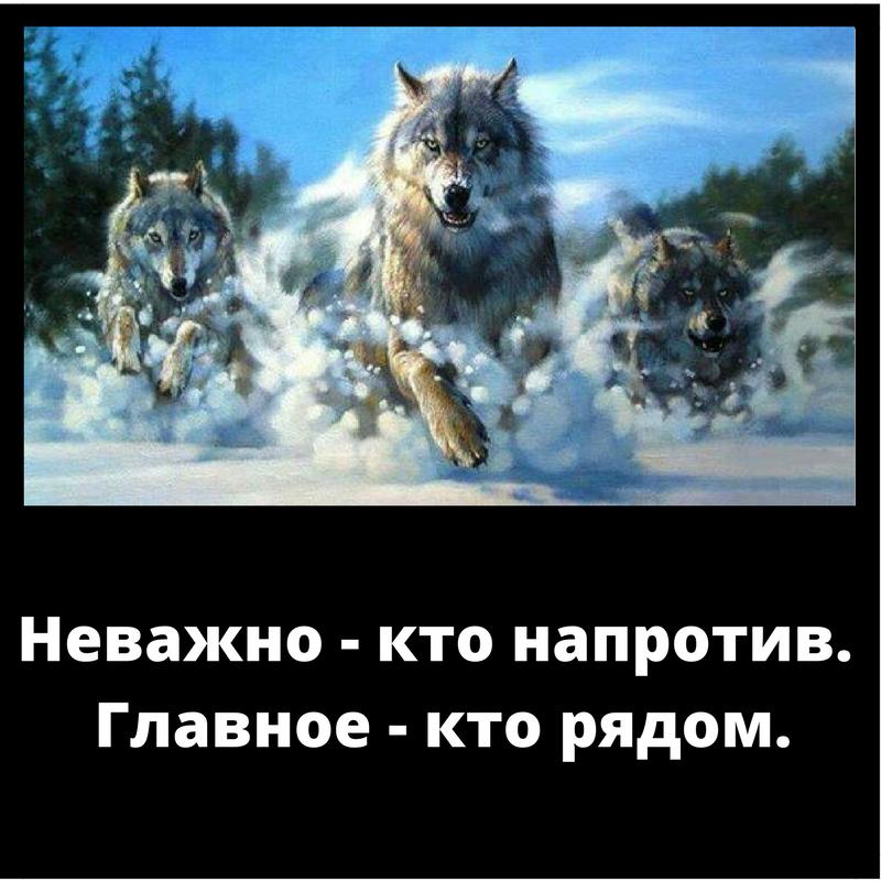 Картинка волка с надписью не важно кто напротив важно кто рядом, лет