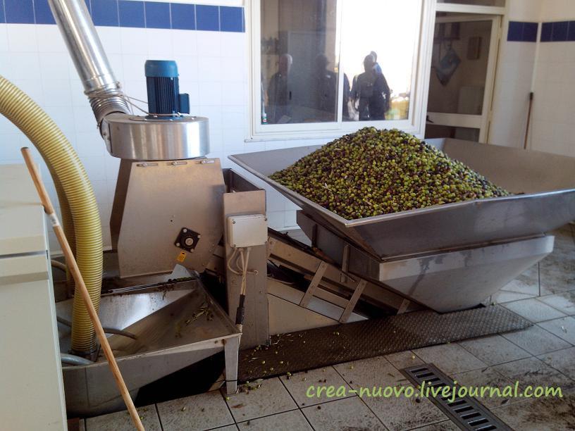 Первая помывка оливок