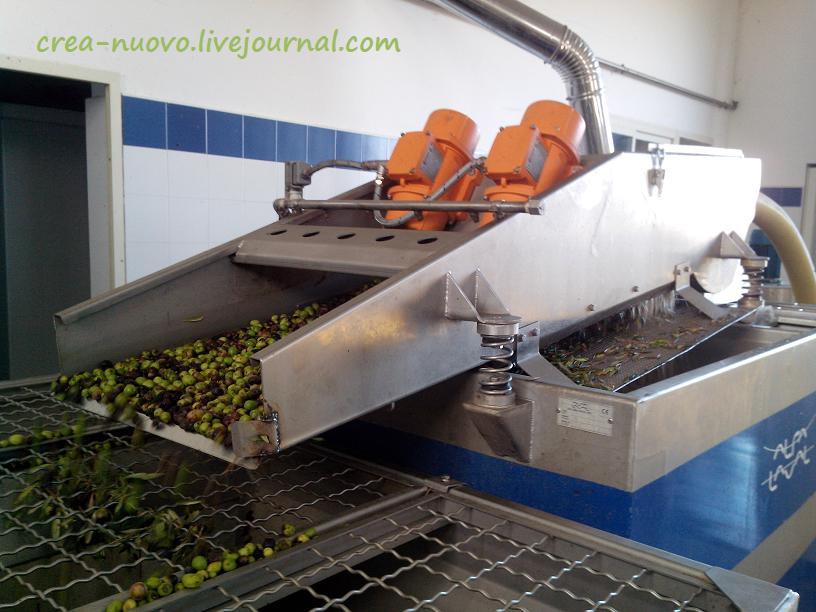 Вторая помывка оливок