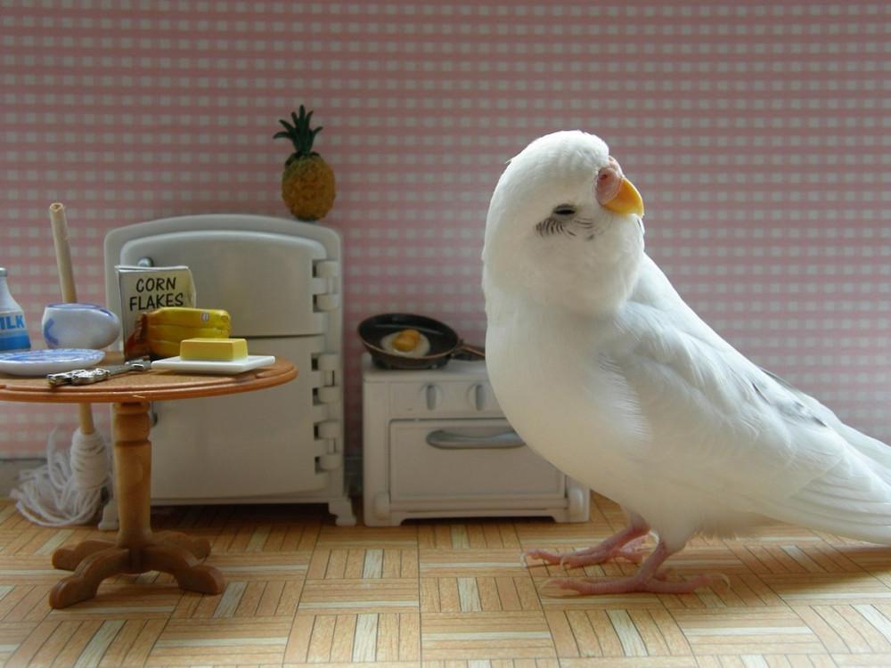 Конфуций приколы, прикольные картинки волнистые попугаи
