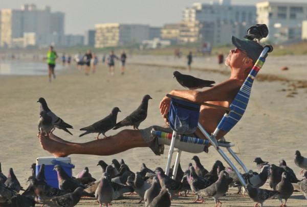 пляж голуби лежак