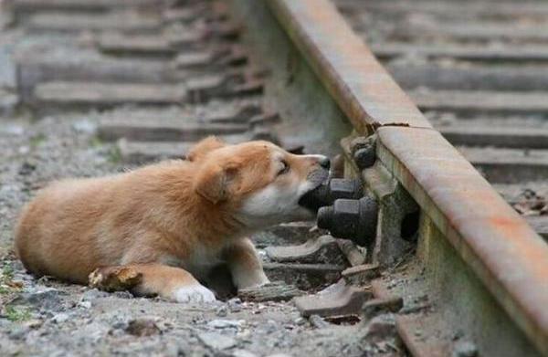 собака грызет болт