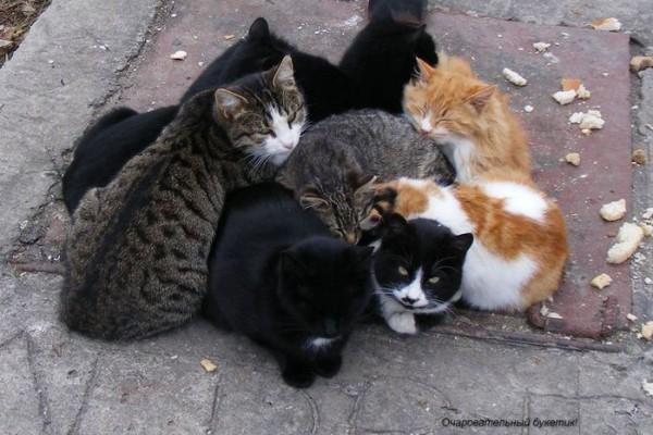 дикие кошки город бездомные
