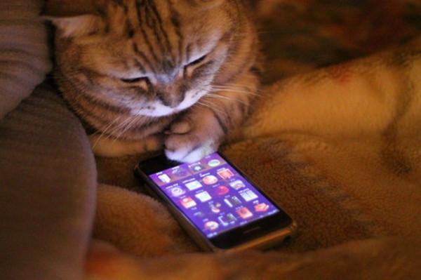 кот и айфон