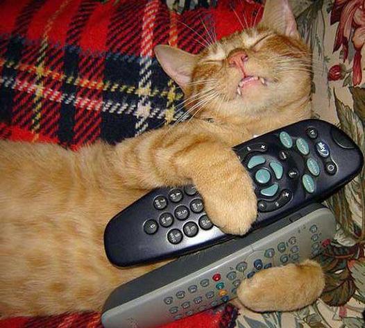 кот спит с пультом от телевизора
