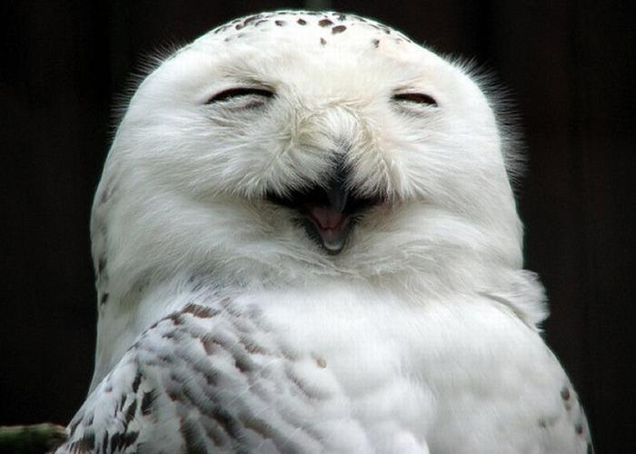 owls_13