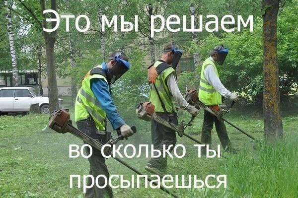 газонокосильщик-утро