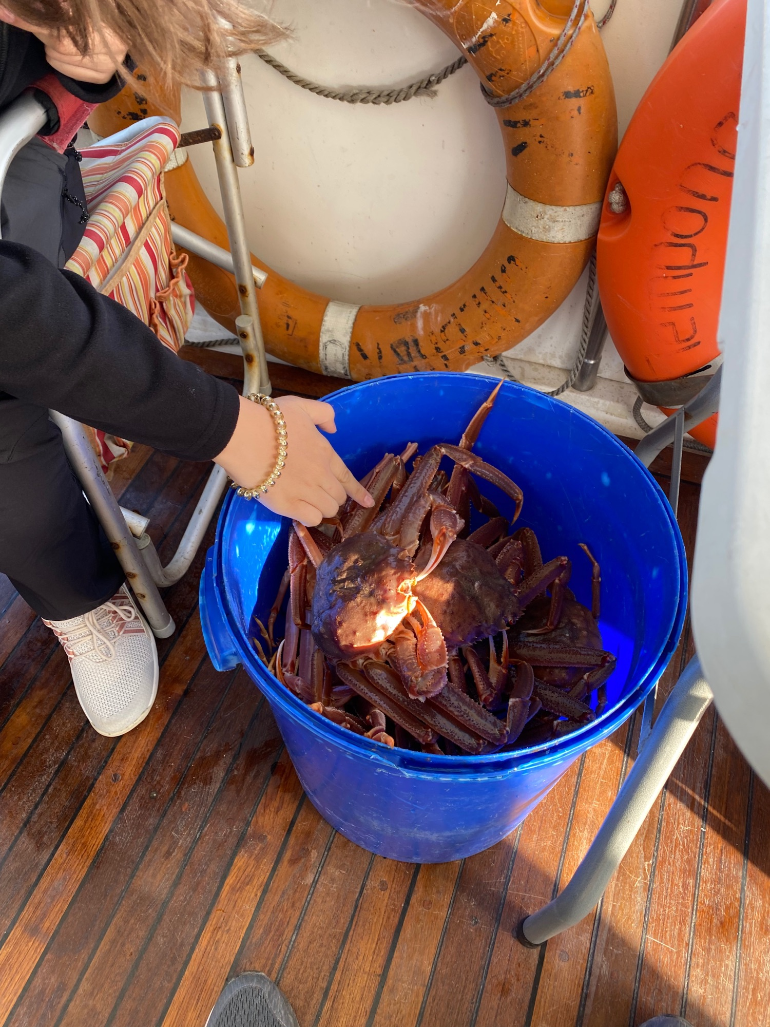 Вон их сколько. В конце нашей поездки нам их сварили и мы ели их прямо на палубе