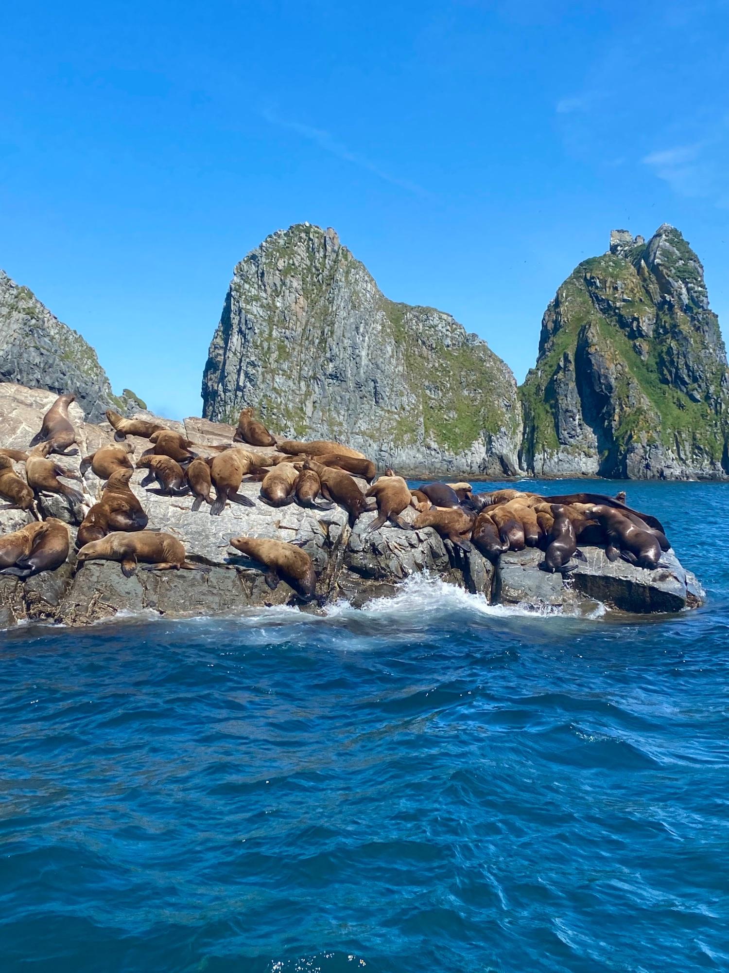 Это сивучи, или одна из разновидностей морских львов. Лежат, орут, дерутся :)