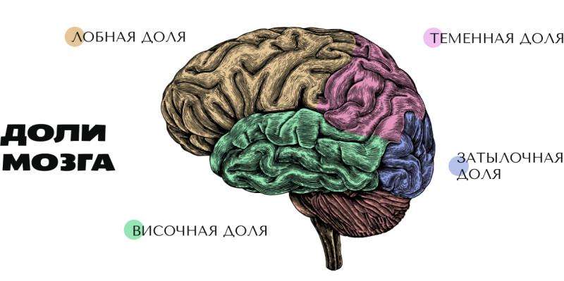 Мозг главный орган человека
