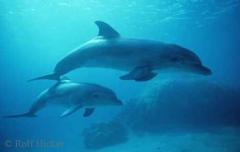 dolphin-photos_4786