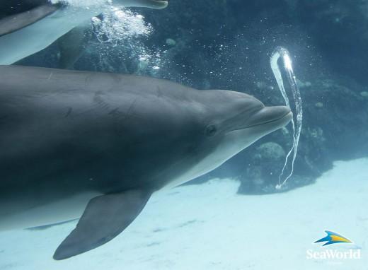 Dolphin-Bubbles-Seaworld