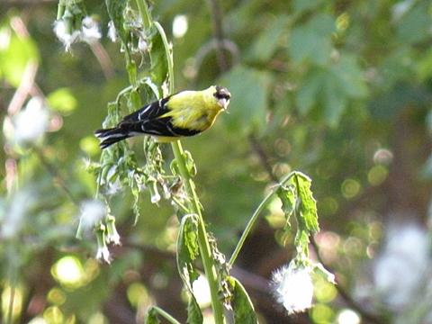 Locust Grove Nature Center Bethesda Md Director