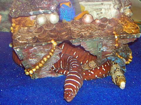 Image Result For Treasure Chest Aquarium