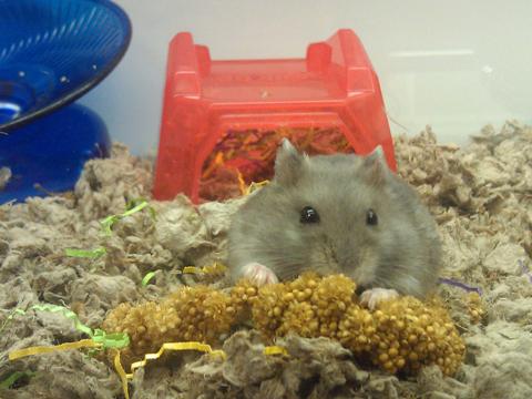Food Hamsters Like To Eat