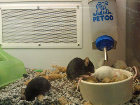 Petco Rats Little Reviews: Poem f...