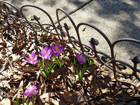 Little Reviews Poem For Saturday Sacrifice Of Angels Spring Flowers