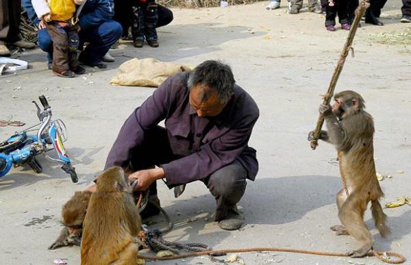 monkey-stick