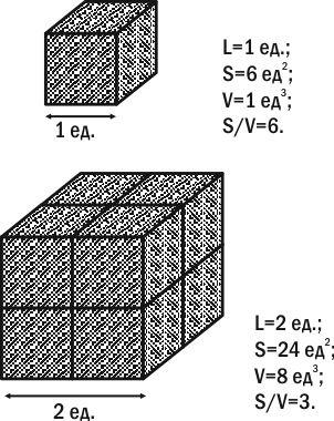 5_11_kuby i ih razmery