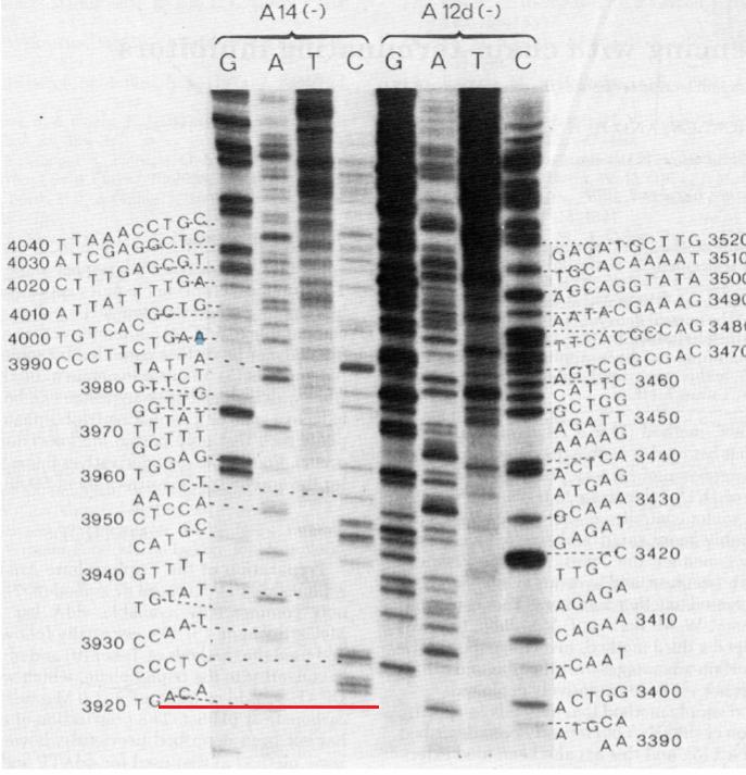 Fig. 1 из https://sci-hub.do/10.1073/pnas.74.12.5463