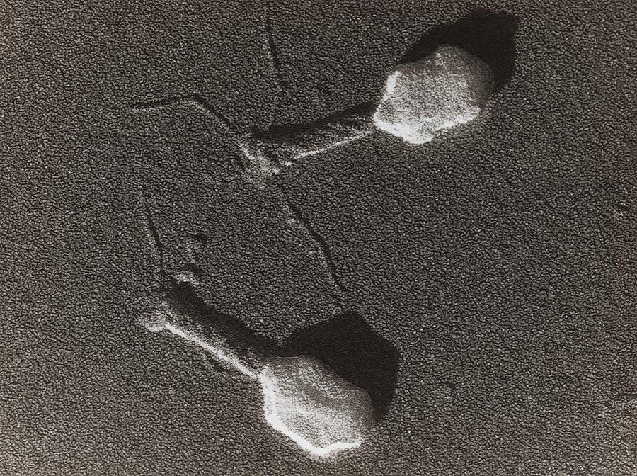Источники: https://imgur.com/RyGpIQZ, https://commons.wikimedia.org/wiki/File:Bacteriophage.jpg