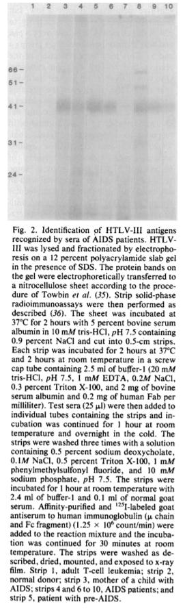 Из статьи:  Antibodies Reactive with Human T-Lymphotropic Retroviruses (HTLV-III) in the Serum of Patients with AIDS