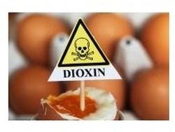 Голландия: В яйцах обнаружен диоксин