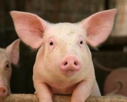 произвели мяса в Рязанской области