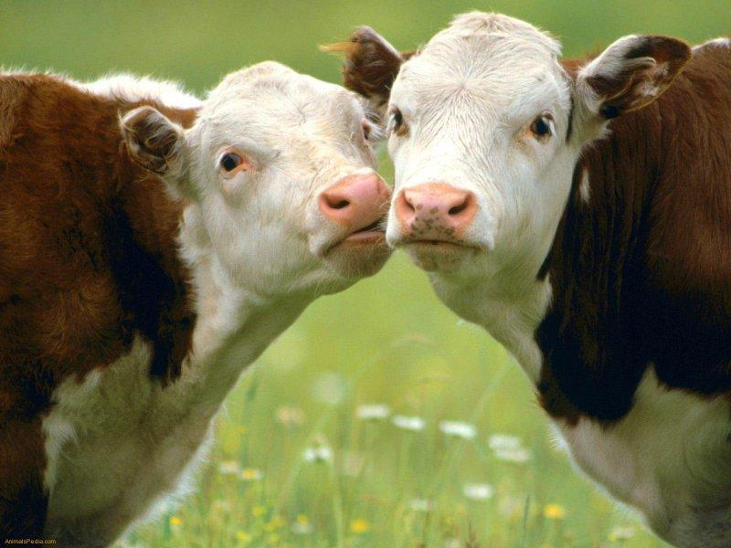 Производство мясопродуктов в Курганской области