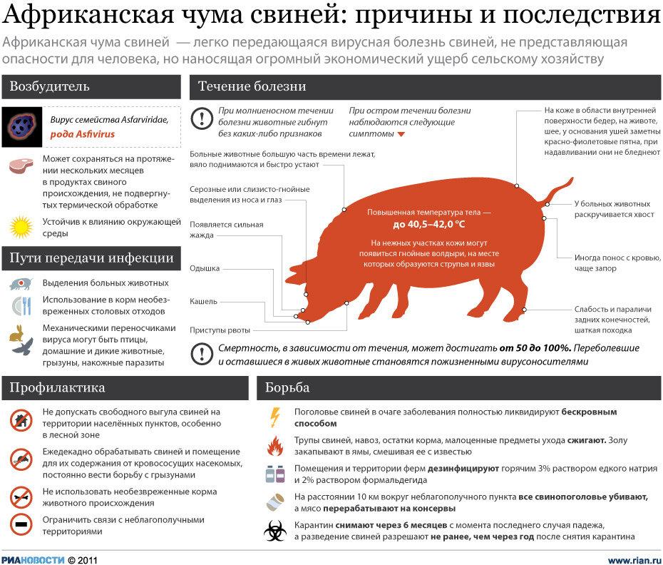Африканская чума свиней(АЧС) – легко передающаяся вирусная болезнь, не представляющая опасности для человека, но наносящая огромный экономический ущерб сельскому хозяйству.