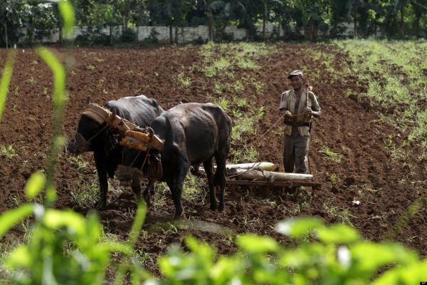 o-AGRICULTURA-CUBA-facebook