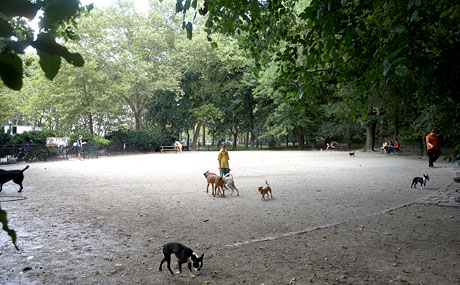 Riverside park dog run