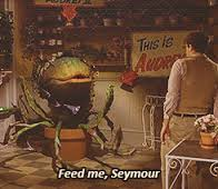 spn 1102 5 Seymour