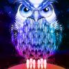 01 owls