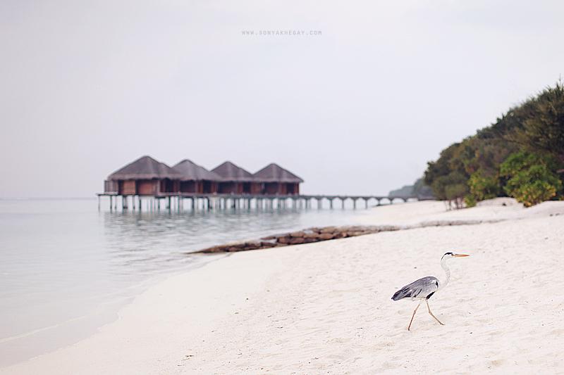 Maldives-part-II-by-Sonya-Khegay-08