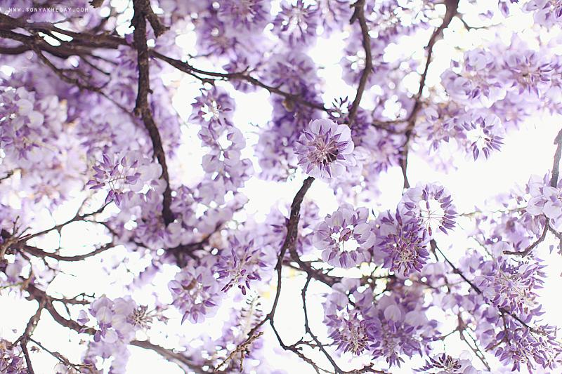 wisteria-by-Sonya-Khegay-01