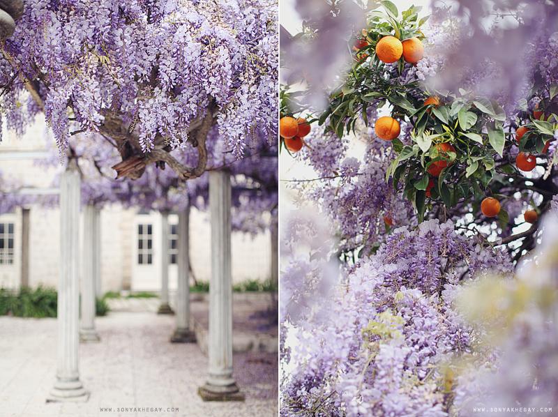 wisteria-by-Sonya-Khegay-03
