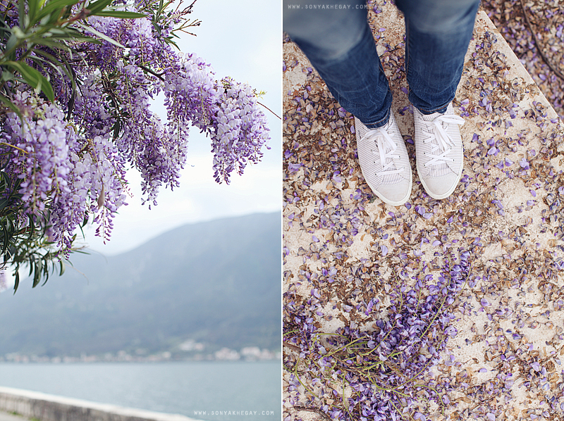 wisteria-by-Sonya-Khegay-05