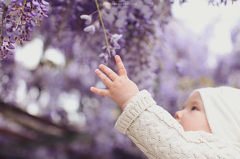wisteria-by-Sonya-Khegay-06