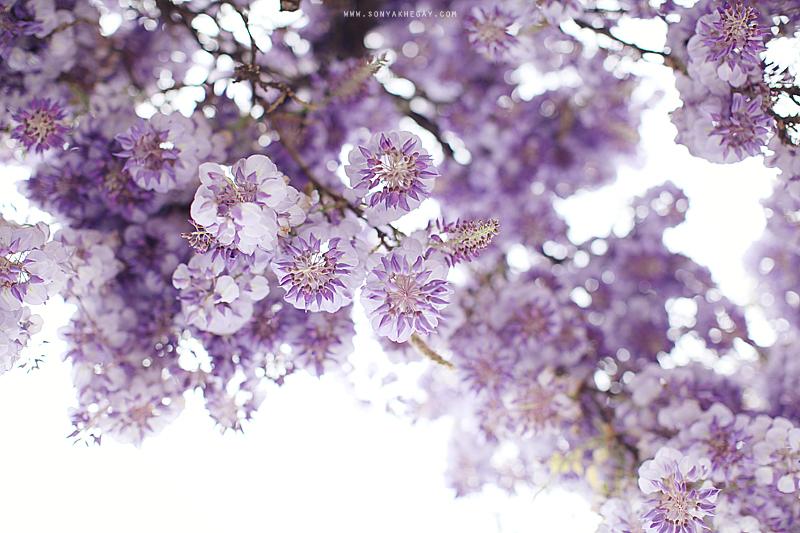 wisteria-by-Sonya-Khegay-07