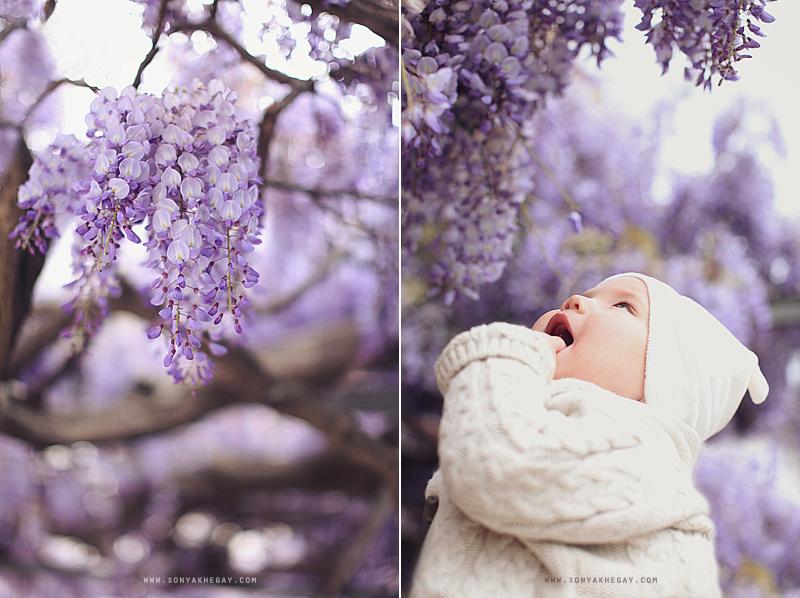 wisteria-by-Sonya-Khegay-02