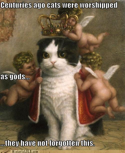 funny-pictures-history-centuries-ago-cats-were-worshipped-as-gods-they-have-not-forgotten-this