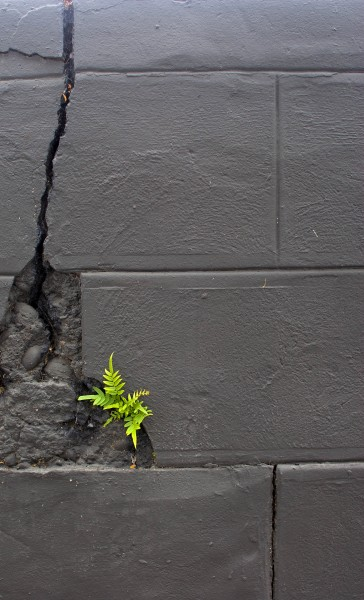 7-20-10-determined-plant