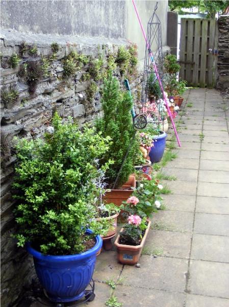 garden july 1st 2013