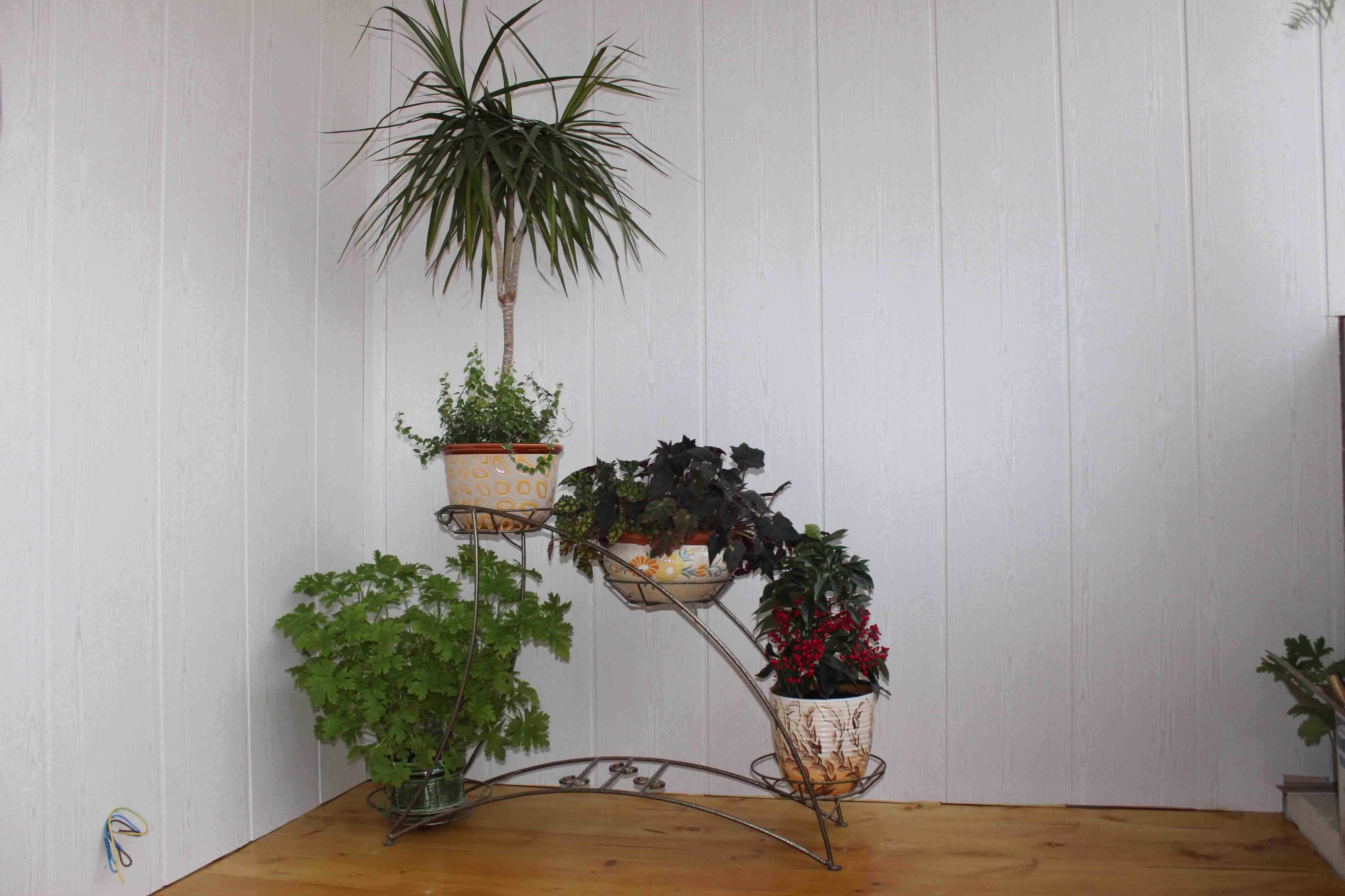 Цветы в квартире дизайн фото