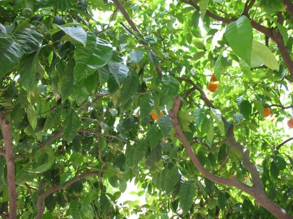 Цвета Пальмы